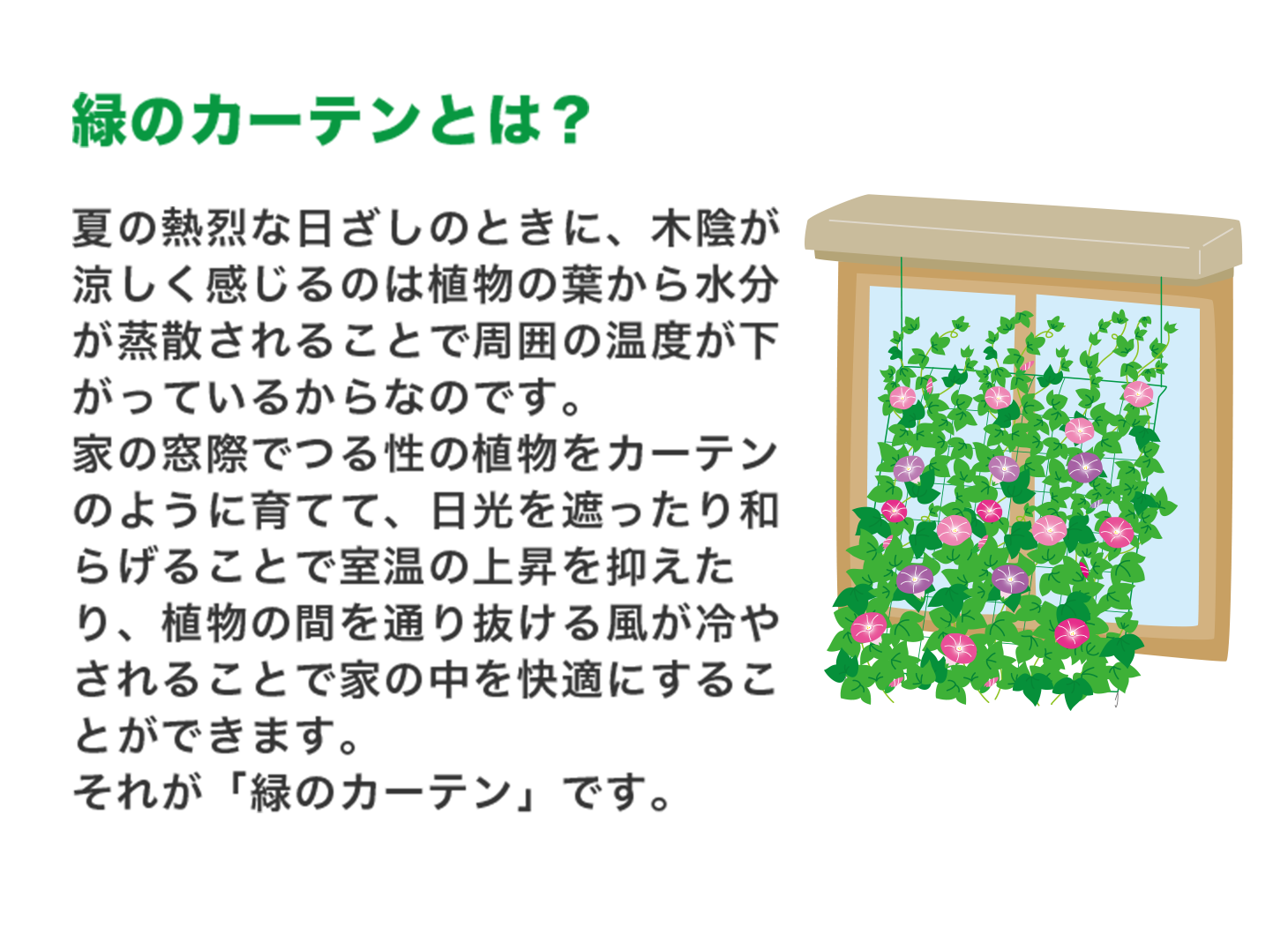 第 伊藤園 3 弾 麦茶 キャンペーン